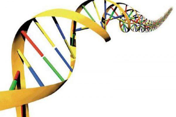 Γονιδιακός έλεγχος DNA TEST